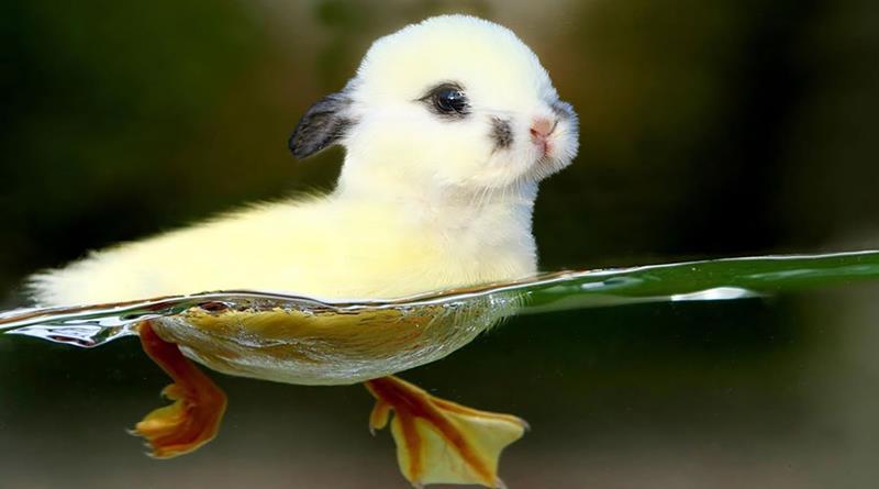 15 furcsa állat-hibird Photoshoppal