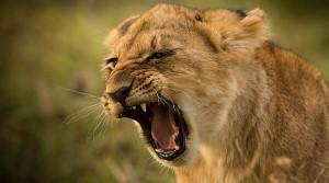 A kenyai vadvilág varázslatos arcai
